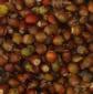 供应:红豆杉种子,红豆杉种子价格,红豆杉种子批发,江苏红豆杉种子批发价格,红豆杉