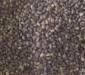 供应:白皮松种子,白皮松种子价格,白皮松种子批发,江苏白皮松种子批发价格,白皮松