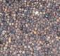 供应:香樟种子,香樟种子价格,香樟种子批发,江苏香樟种子批发价格,香樟种子产地