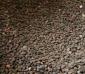 供应:厚朴种子,厚朴种子价格,厚朴种子批发,江苏厚朴种子批发价格,厚朴种子产地