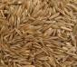 供应:美国四季青种子,美国四季青种子价格,美国四季青种子批发,江苏美国四季青种子