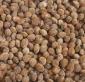 供应:杨梅种子,杨梅种子价格,杨梅种子批发,江苏杨梅种子批发价格,杨梅种子产地